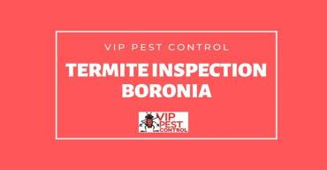 Termite Inspection in Boronia, Victoria