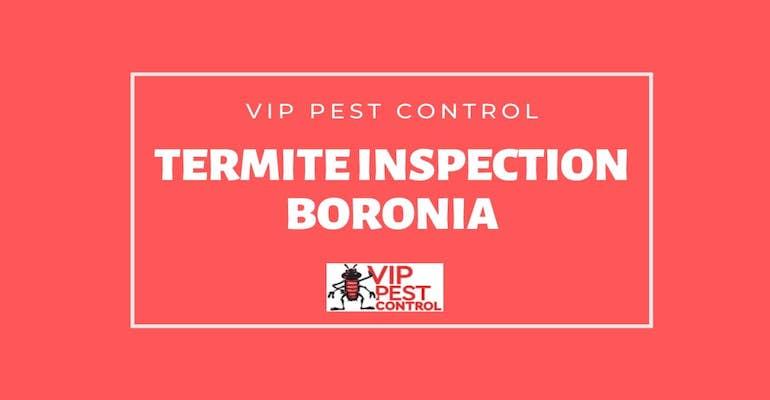 Termite Inspection in Boronia, Victoria