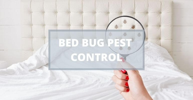 What Is The Best Pest Control Company For Bed Bugs?