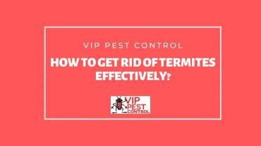 How to Get Rid of Termites Effectively?