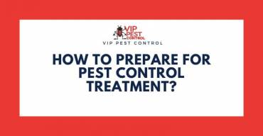 How To Prepare For Pest Control Treatment?