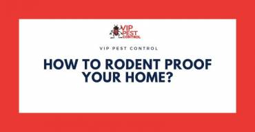 How to Rodent Proof Your Home?