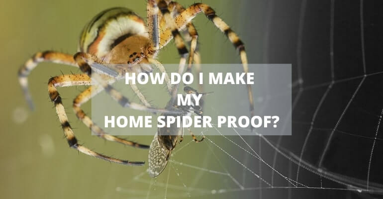 How to Spider Proof Your Home?
