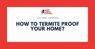 How to Termite Proof Your Home?