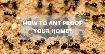 How to Ant Proof Your Home?