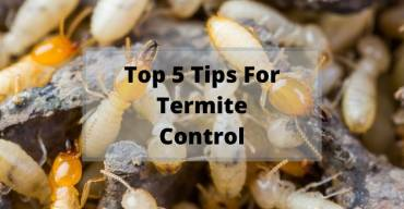 Top 5 Tips for Termite Control in Australia
