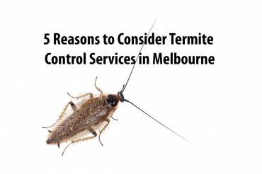 5 Reasons to Consider Termite Control Services in Melbourne