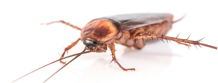 5 Reasons to Consider Termite Control Services