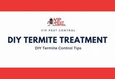 7 Must Know Tips for DIY Termite Treatment in Australia