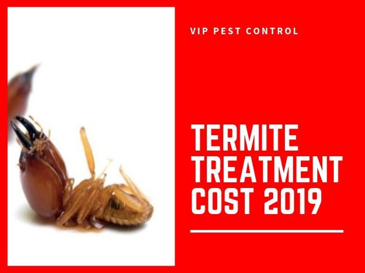 How Much Does Termite Treatment Cost in Melbourne? 2019