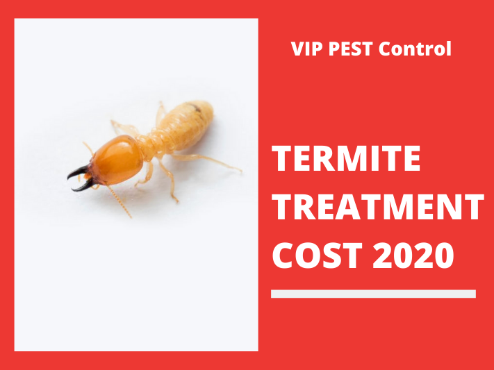 How Much Does Termite Treatment Cost in Melbourne? 2020