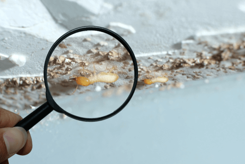 termite treatment prices