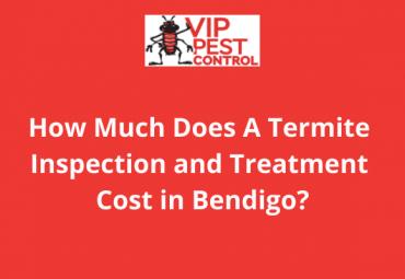 Termite Treatment Cost in Bendigo: How much does a termite inspection and treatment cost?