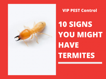 10 SIGNS YOU MIGHT HAVE TERMITES – SIGNS OF A TERMITE INFESTATION