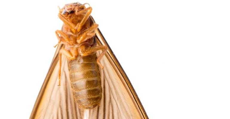 termite infestation melbourne