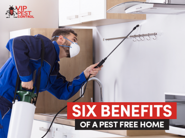 Six Benefits of a Pest Free Home